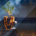 Шрила Прабхупада отвечает на вопросы об уходе за Туласи Деви