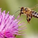 Умонастроение пчелы и мухи