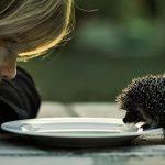 Что значит «делать добро»?
